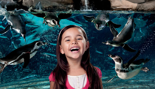 aquarium of catholic hotel tickets